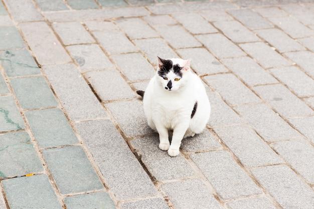 Übergewichtige katze, die auf versteckte snacks im rasen schaut