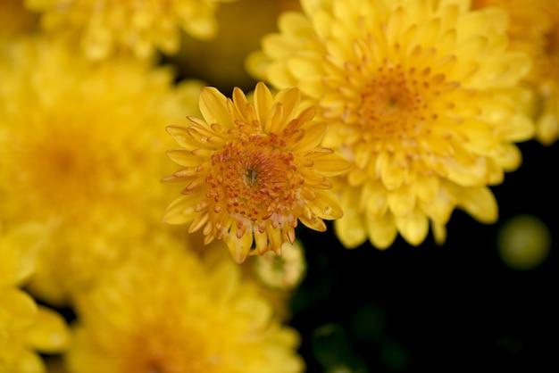 Überkopf-nahaufnahmeaufnahme einer gelben blume mit einem unscharfen natürlichen