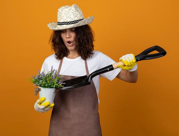 Überraschte junge gärtnerin in uniform mit gartenhut und handschuhen, die blume im blumentopf mit spaten lokalisiert auf orange halten