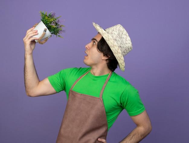 Überraschtes stehen in der profilansicht junger männlicher gärtner in uniform mit gartenhut, der blume im blumentopf erhöht und hand auf hüfte lokalisiert auf purpur betrachtet