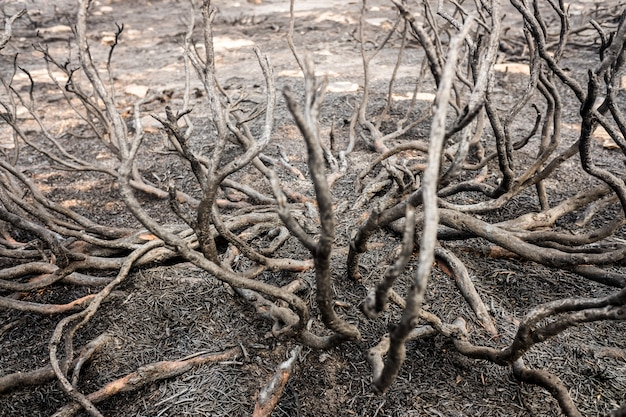Überreste eines waldbrands mit verbranntem gestrüpp.
