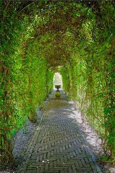 Überwachsener gartenweg der grünen berceau-laube