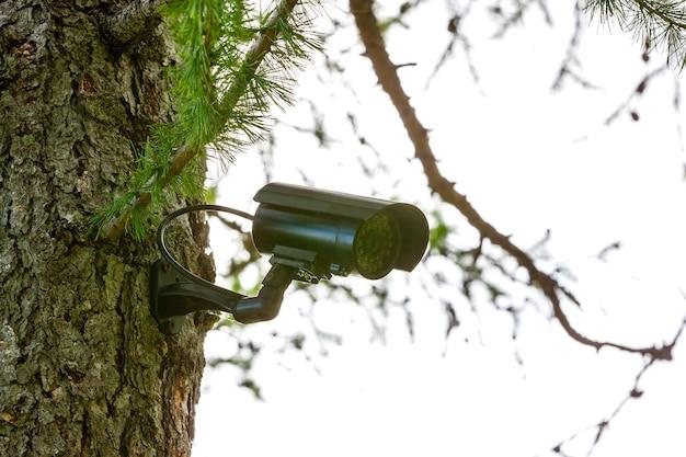 Überwachungskamera auf dem baum