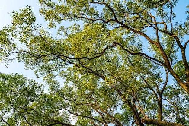Üppig grüne bäume unter blauem himmel