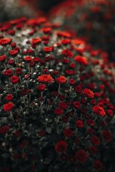 Üppig grüner blumenbusch aus frischen roten blumen im garten frische der natur