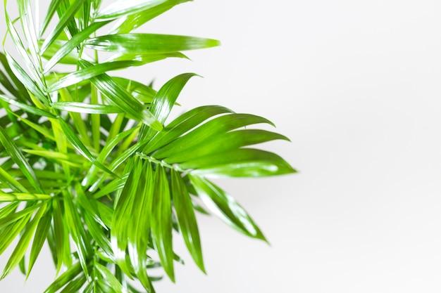 Üppige grüne blätter auf weiß