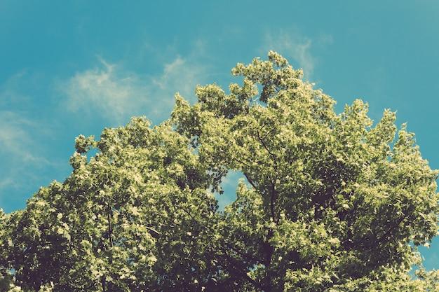 Üppiger grüner baum mit blättern auf hintergrund des blauen himmels in den retro- farben