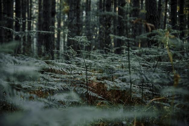Üppiger grüner farn, der im wald wächst