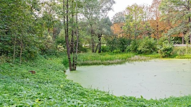 Üppiger grüner sumpf. die sonne scheint durch das dichte laub und offenbart eine wunderschöne naturlandschaft