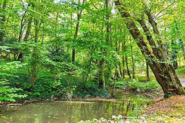 Üppiger grüner sumpf und tropischer wald