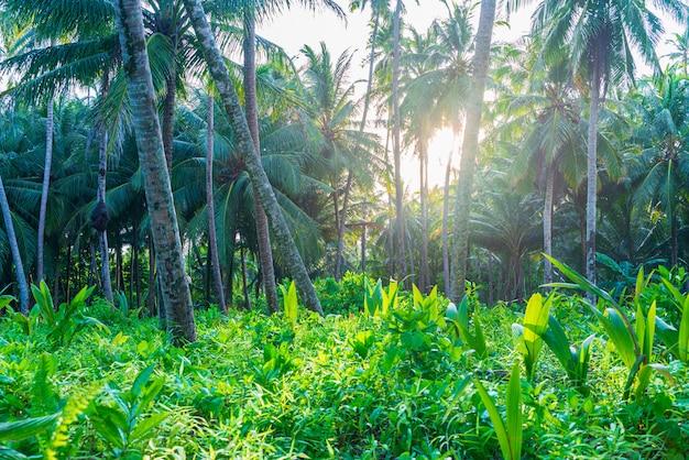 Üppiger grüner tropischer wald, sunburst im palmenwald