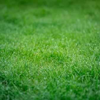 Üppiges grünes gras mit glänzenden tropfen des taus morgens