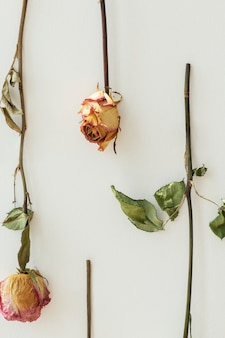 Umgedrehte rosen an einer wand