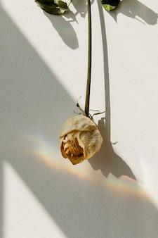 Umgedrehte weiße rose an einer wand