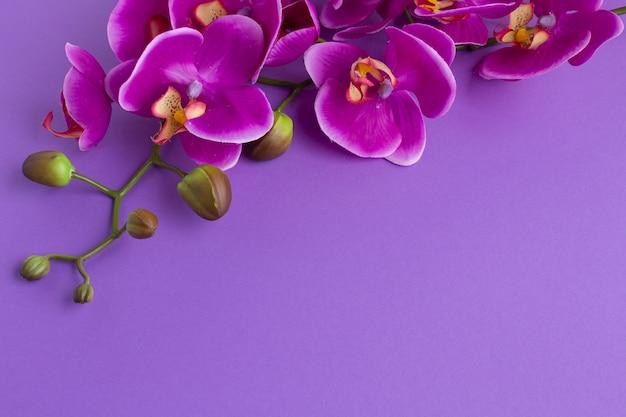 Umgedrehter kopienraumhintergrund mit orchideen