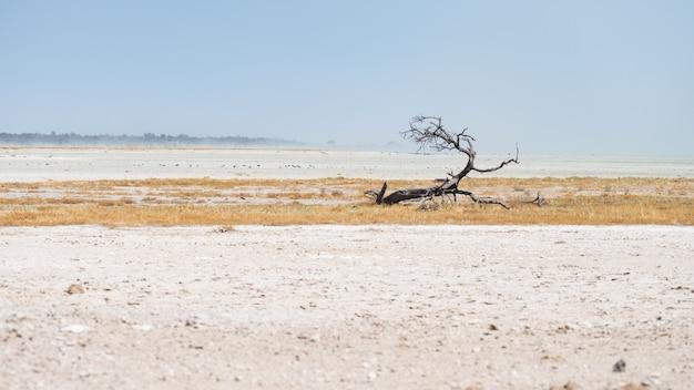 Umsponnener akazienbaum in der wüstenlandschaft im etosha nationalpark, reiseziel in namibia