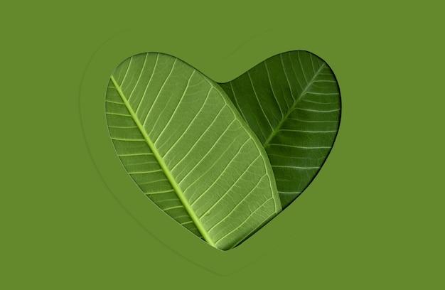Umwelt, gesundheit. grünes blatt als herz. grüne energie, erneuerbare und nachhaltige ressource
