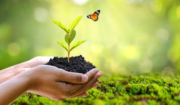 Umwelt tag der erde in den händen der bäume, die sämlinge wachsen. bokeh grüner hintergrund weibliche hand, die baum auf naturfeldgras hält walderhaltungskonzept