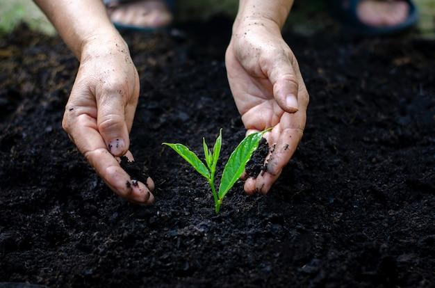 Umwelt tag der erde in den händen von bäumen wachsende sämlinge.