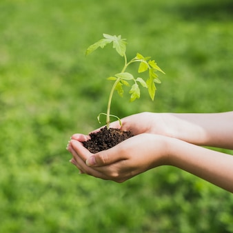 Umwelt und freiwilligen-konzept