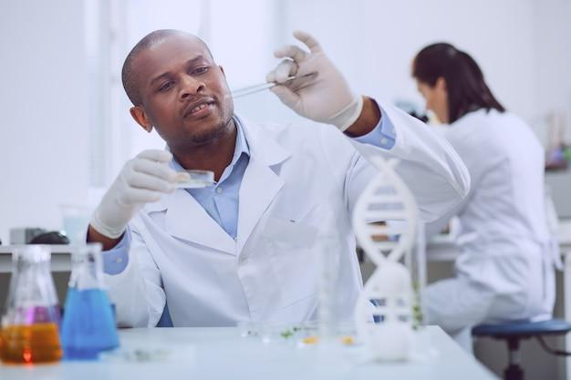 Umwelt verbessern. kluger erfahrener biologe, der während der arbeit im labor einen test mit samen durchführt