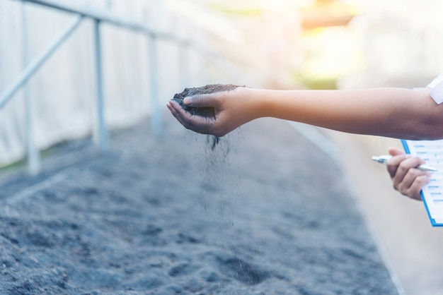 Umweltkonzept der umweltfreundlichen grünen erde. hand mit wachsendem baum am tag der erde am morgen