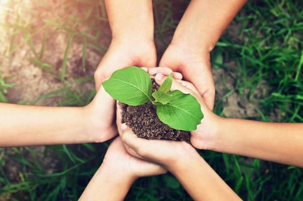 Umweltkonzept. handgruppe, die kleinen baum hält, der auf schmutz mit grünem grashintergrund wächst