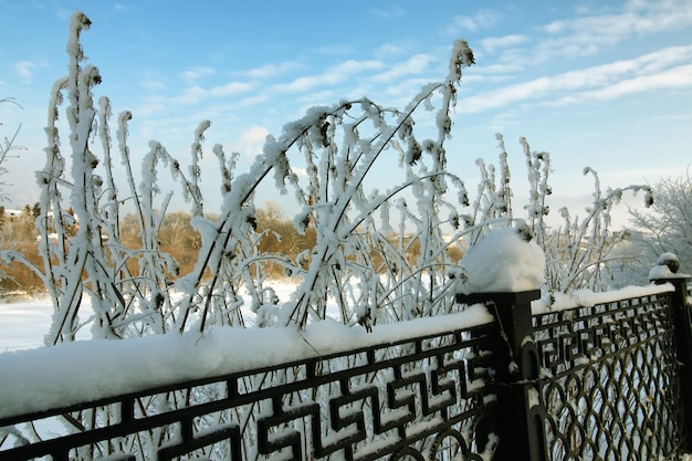 Umzäunter schnee-winterpark