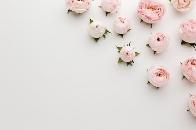 Unbedeutende rosa und weiße rosen und kopienraumhintergrund