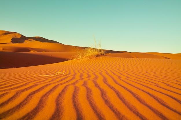 Unberührte sanddünen in der abgelegenen wüste