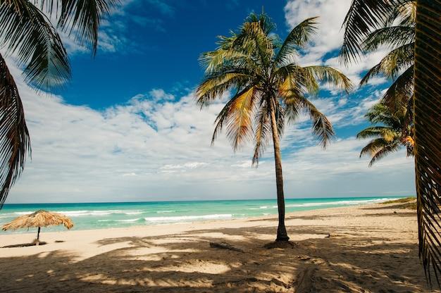 Unberührter tropischer strand mit palmen