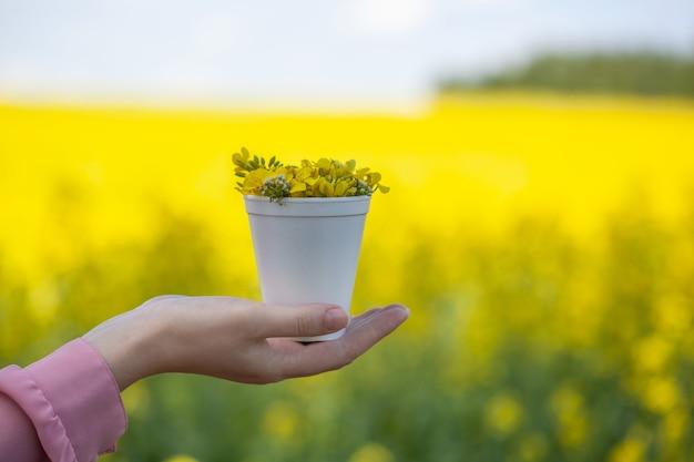 Unerkennbare junge frau hält in der hand einen strauß wilder gelber rapsblumen auf dem hintergrund des rapsfeldes. natürlicher raps, aus dem rapsöl hergestellt wird