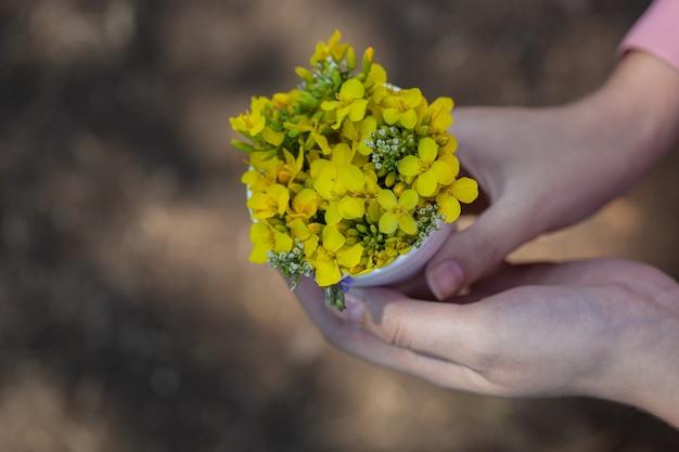 Unerkennbare junge frau hält in ihren händen einen strauß wilder gelber rapsblumen. natürlicher raps, aus dem rapsöl hergestellt wird