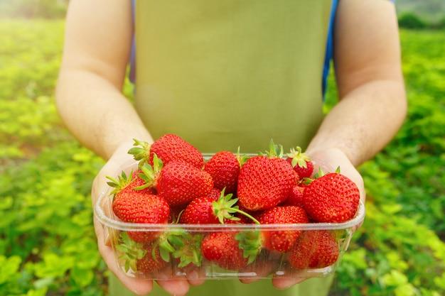 Unerkennbarer mann, der einen kasten mit frischen reifen erdbeeren in archiviert hält