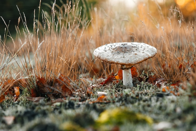 Ungenießbare pilze auf natur.
