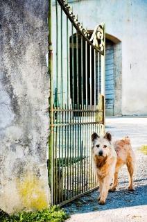 Ungepflegten hund wartet vor dem tor