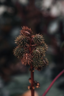 Ungewöhnliche dornige tropische pflanze, die in der wilden natur wächst