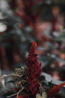Ungewöhnliche rote flauschige frische pflanze, die in der wilden natur wächst