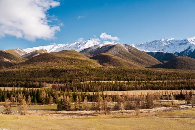 Unglaubliche landschaft der steppe mit seen und bäumen