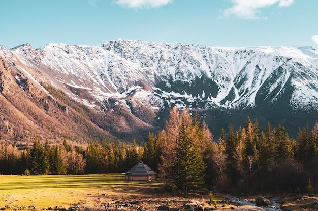 Unglaubliche landschaft mit bäumen auf dem hintergrund der schneebedeckten gipfel des altai-gebirges