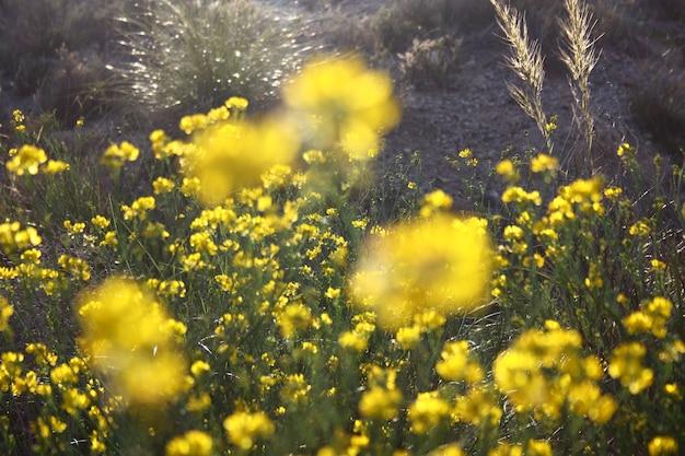 Unschärfe gelber blüten mit natürlichen grünen blättern wird als schöner unscharfer hintergrund verwendet