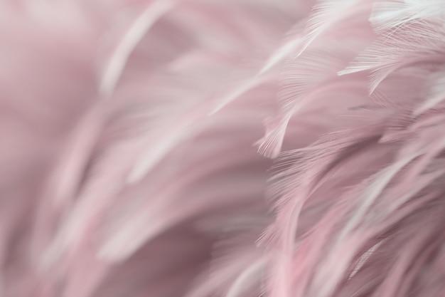 Unschärfe vogel hühnerfeder textur für hintergrund