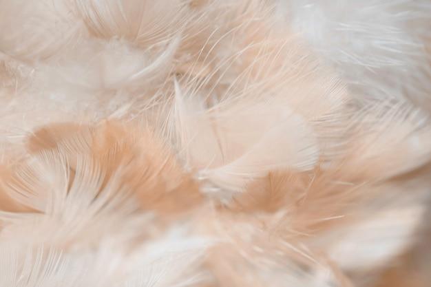 Unschärfe-vogelhühner-federbeschaffenheit für hintergrund