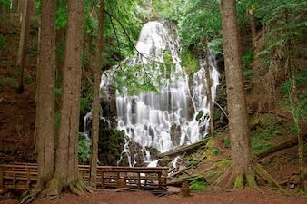 Unscharfe Bewegung schoss vom Strom und von den Wasserfällen im abgelegenen Waldgebiet mit Steg im Vordergrund