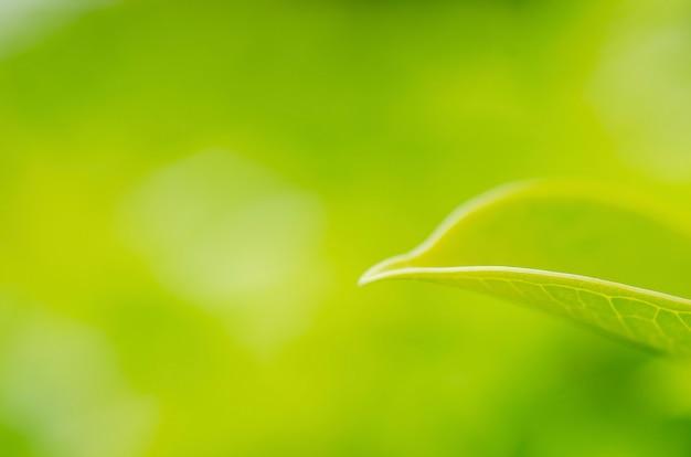 Unscharfe grünblätter mit unscharfem musterhintergrund