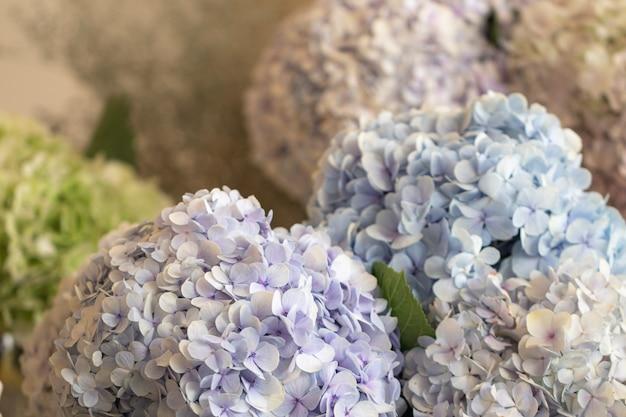 Unscharfe nahe hohe blaue hortensieblumen.