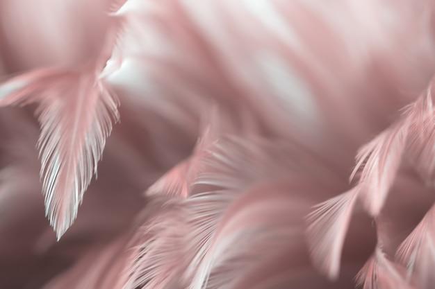 Unscharfe vogelhühnerfederbeschaffenheit für hintergrund
