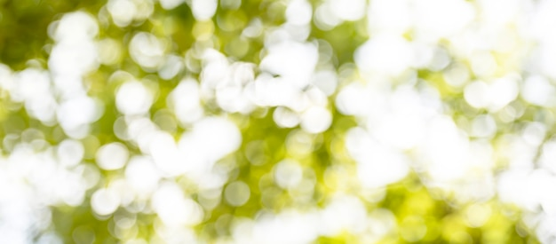 Unscharfe weiche grüne bokeh abstrakte naturhintergründe