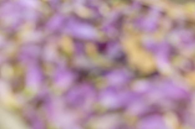 Unscharfer abstrakter hintergrund des fallenden blumenblattes der purpurroten blume.