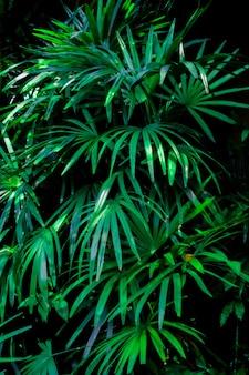 Unscharfer vertikaler tropischer pflanzenhintergrund. hellgrüne blätter von pflanzen auf dunklem hintergrund. platz für text, vorlage, dekoration.